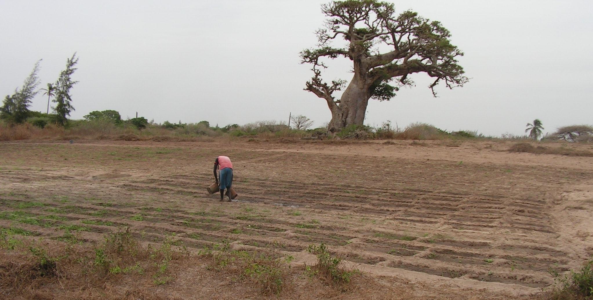 orto Dakar